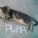 Puma...