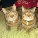 moje koty jaraja razem ze mna