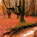 Leśny klimat (16)