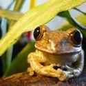 raz dwa trzy żaba paczy
