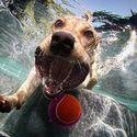 psy pod wodą