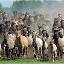 I w sto koni...