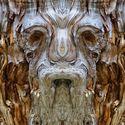 Wyglądają jak Baśniowe Stwory lecz to odbicia lustrzane drzew ! :)