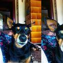 3 fazy mojego psa ;d