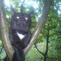 Czy z tym kotem coś jest nie tak ? :)