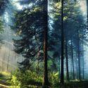 Przez las...