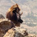 W Etiopii