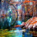 Cyprus trees Texas USA