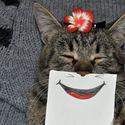 Kreatywny właściciel dorysowuje śmieszne minki swojemu kotu :)