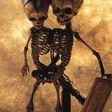 szkielety syjamskie 1800r