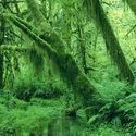 Zielony Leśny