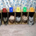 Wybierz kota