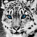 Śnieżny tygrys