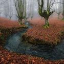 Tajemniczy las.