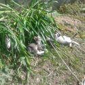 Kociaczki  :)