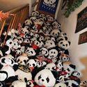 Misie panda.