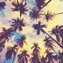 Pod palmami.
