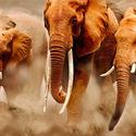 Słonie.