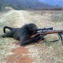 Nawet małpa potrafi strzelać