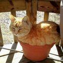 Kot zamiast ganji