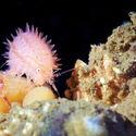 fauna morza białego