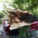 kochanie, przywiozłem drzewo do kominka..