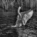 Magia czarno-białych zdjęć