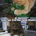 Jak to robią koty?