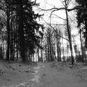 Tymczasem w moim lesie i jego okolicach :)