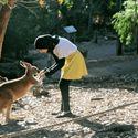 Buziak dla kangura