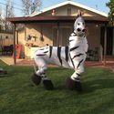 Tańcząca zebra