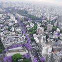 Jacaranda, Buenos Aires, Argentyna.