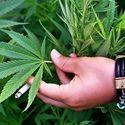 Nowy Jork 21. stanem USA, gdzie marihuana jest dostępna do celów medycznych !!