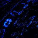 Bioluminescencja planktonu ;D