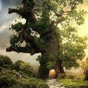 w drzewie