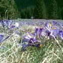 wiosno naku*wiaj plis...
