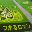 Niezwykłe pola ryżowe