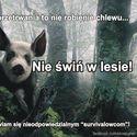 Nie świń w lesie!