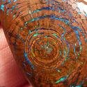 Opal w skamieniałym drewnie