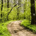 Leśna droga - własne