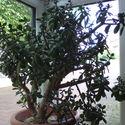 bonsai dla początkujących