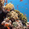 podwodne cuda 2