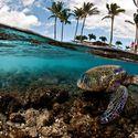 Tymczasem na Hawajach