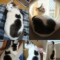 Kot na kocie.