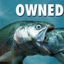 fish owned