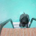 Żółw na wakacjach