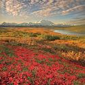 park narodowy denali - alaska