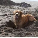 Ten moment gdy nasz niewinny pies podczas kopania wygląda jak wilkołak...