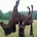 Z moim koniem