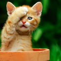Dla lubiących koty. :P